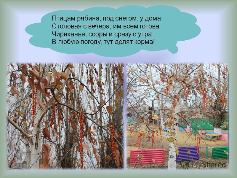Птицам рябина, под снегом, у дома Столовая с вечера, им всем готова Чириканье, ссоры и сразу с утра В любую погоду, тут делят корма!