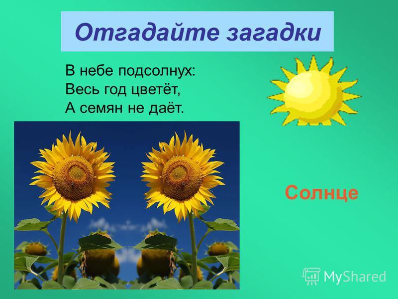 Отгадайте загадки В небе подсолнух: Весь год цветёт, А семян не даёт. Солнце