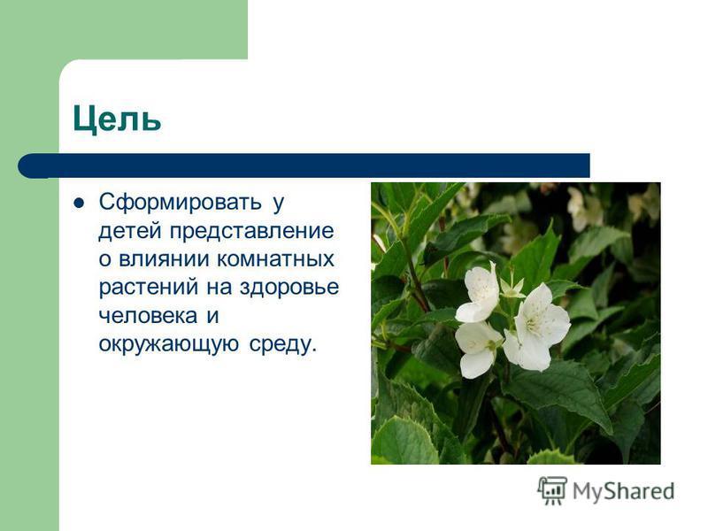 Цель Сформировать у детей представление о влиянии комнатных растений на здоровье человека и окружающую среду.
