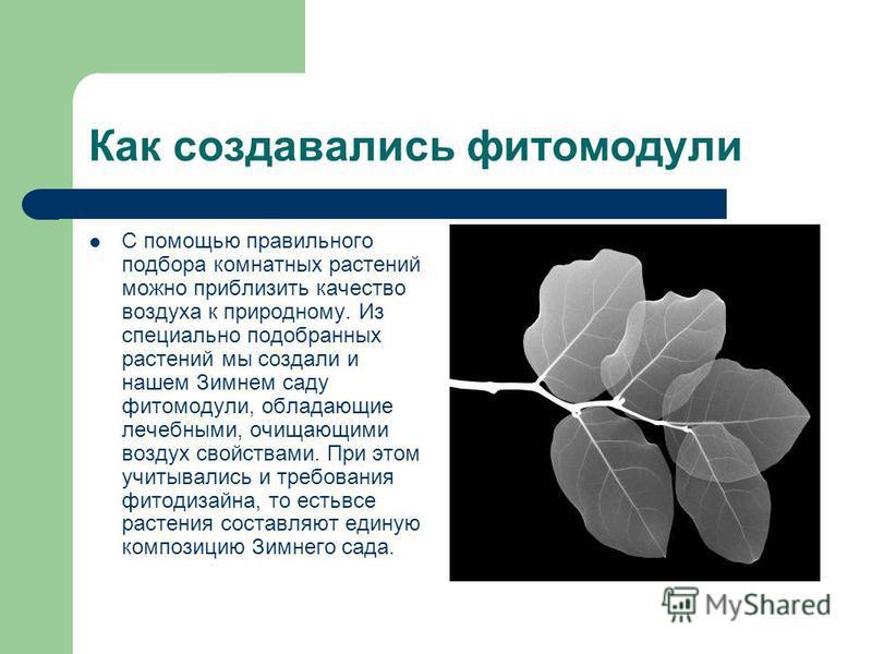 Как создавались фитомодули С помощью правильного подбора комнатных растений можно приблизить качество воздуха к природному. Из специально подобранных растений мы создали и нашем Зимнем саду фитомодули, обладающие лечебными, очищающими воздух свойства