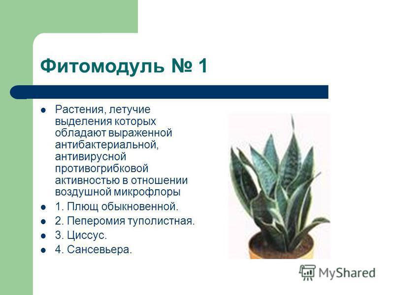 Фитомодуль 1 Растения, летучие выделения которых обладают выраженной антибактериальной, антивирусной противогрибковой активностью в отношении воздушной микрофлоры 1. Плющ обыкновенной. 2. Пеперомия туполистная. 3. Циссус. 4. Сансевьера.