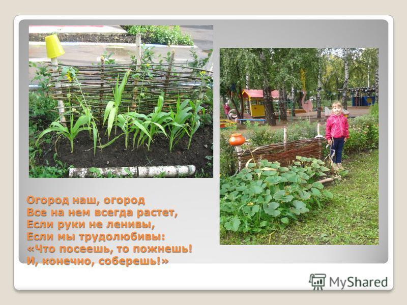 Огород наш, огород Все на нем всегда растет, Если руки не ленивы, Если мы трудолюбивы: «Что посеешь, то пожнешь! И, конечно, соберешь!»