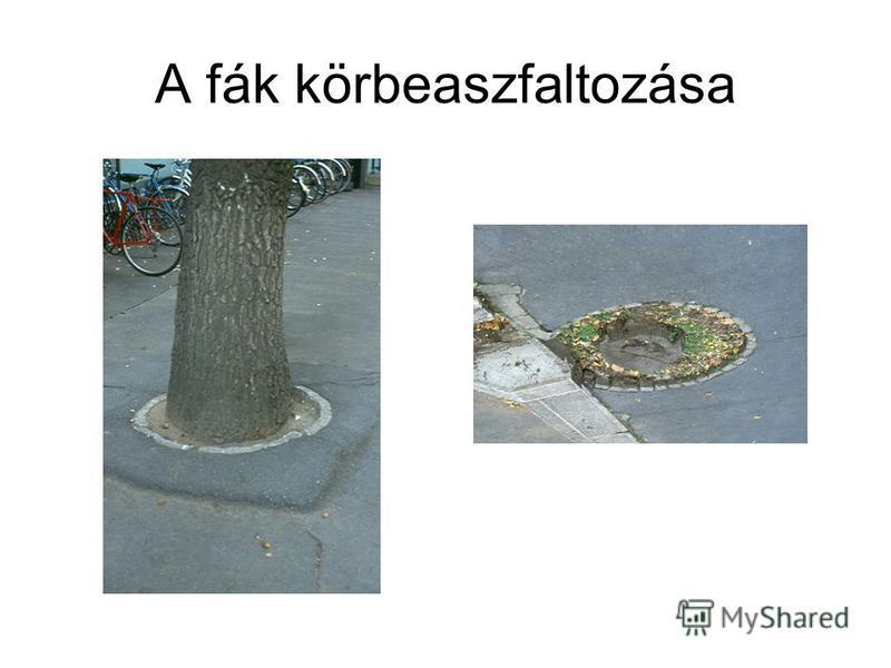 A fák körbeaszfaltozása