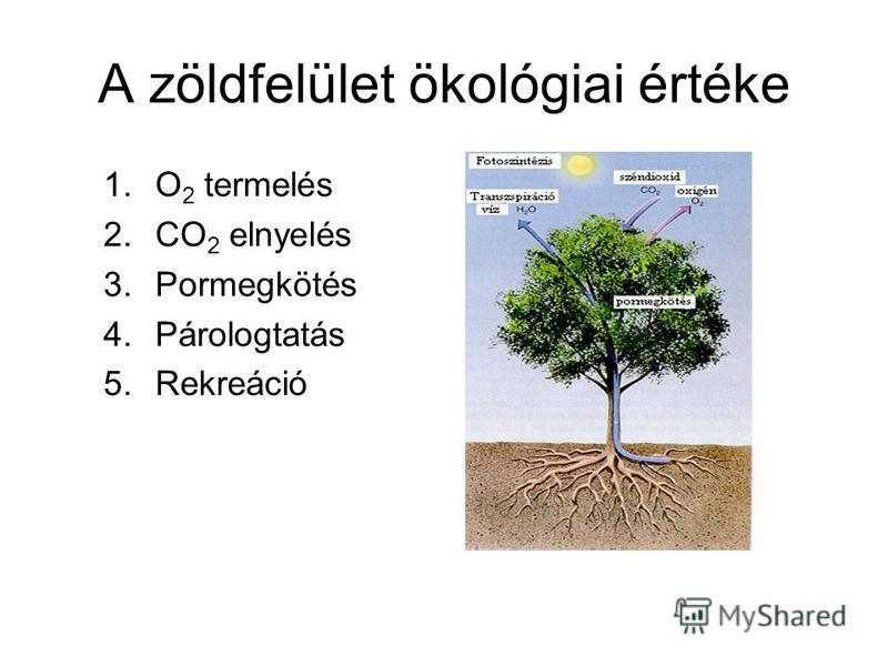A zöldfelület ökológiai értéke 1.O 2 termelés 2.CO 2 elnyelés 3.Pormegkötés 4.Párologtatás 5.Rekreáció