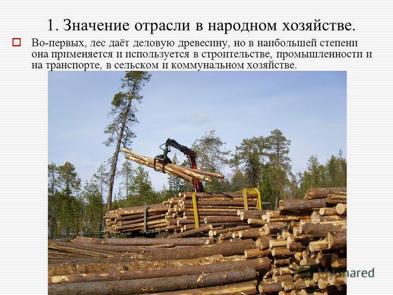 1. Значение отрасли в народном хозяйстве. Во-первых, лес даёт деловую древесину, но в наибольшей степени она применяется и используется в строительстве, промышленности и на транспорте, в сельском и коммунальном хозяйстве.