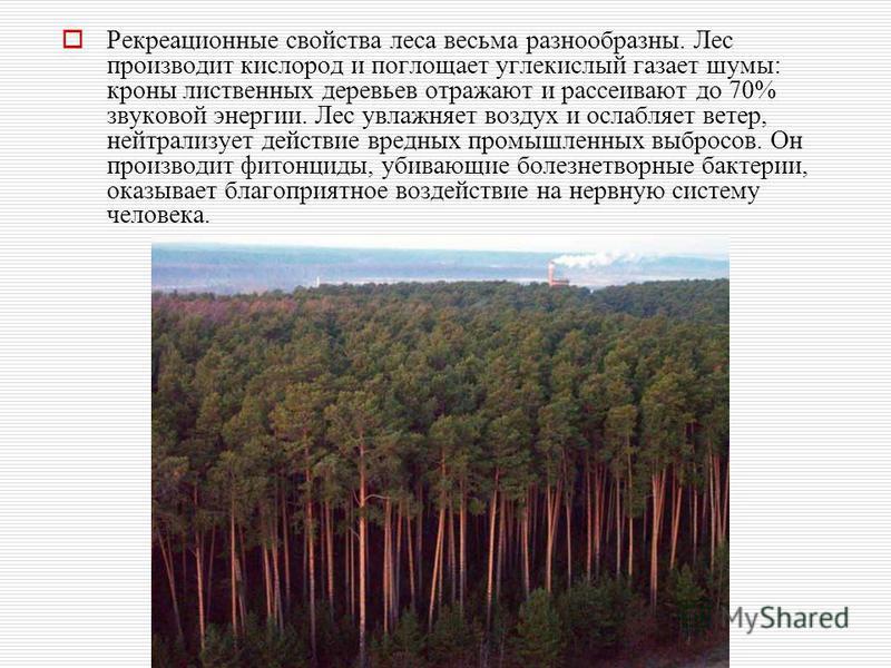 Рекреационные свойства леса весьма разнообразны. Лес производит кислород и поглощает углекислый газет шумы: кроны лиственных деревьев отражают и рассеивают до 70% звуковой энергии. Лес увлажняет воздух и ослабляет ветер, нейтрализует действие вредных