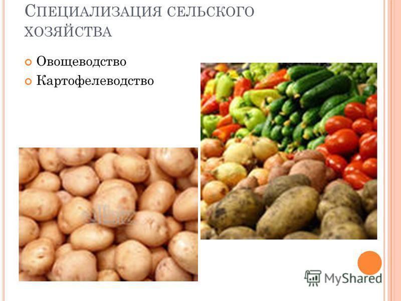 С ПЕЦИАЛИЗАЦИЯ СЕЛЬСКОГО ХОЗЯЙСТВА Овощеводство Картофелеводство
