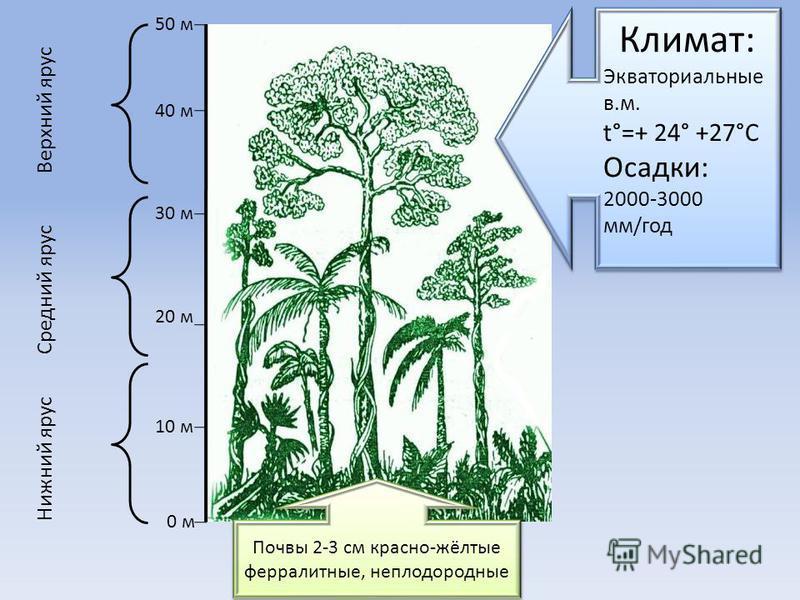 0 м 10 м 20 м 30 м 40 м 50 м Нижний ярус Средний ярус Верхний ярус Почвы 2-3 см красно-жёлтые ферраллитные, неплодородные Климат: Экваториальные в.м. t°=+ 24° +27°C Осадки: 2000-3000 мм/год Климат: Экваториальные в.м. t°=+ 24° +27°C Осадки: 2000-3000