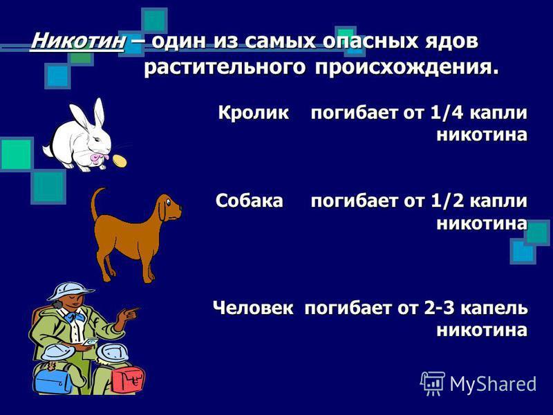 Никотин – один из самых опасных ядов растительного происхождения. растительного происхождения. Кролик погибает от 1/4 капли Кролик погибает от 1/4 капли никотина никотина Собака погибает от 1/2 капли Собака погибает от 1/2 капли никотина никотина Чел
