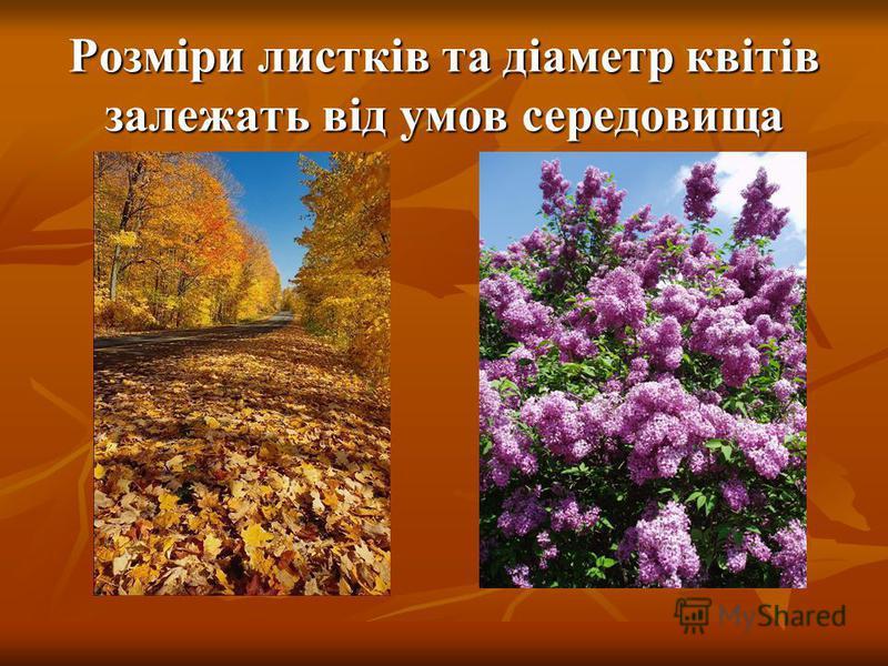 Діаметр квітів, що отримали краще живлення більший, від тих, які потрапили в гірші умови