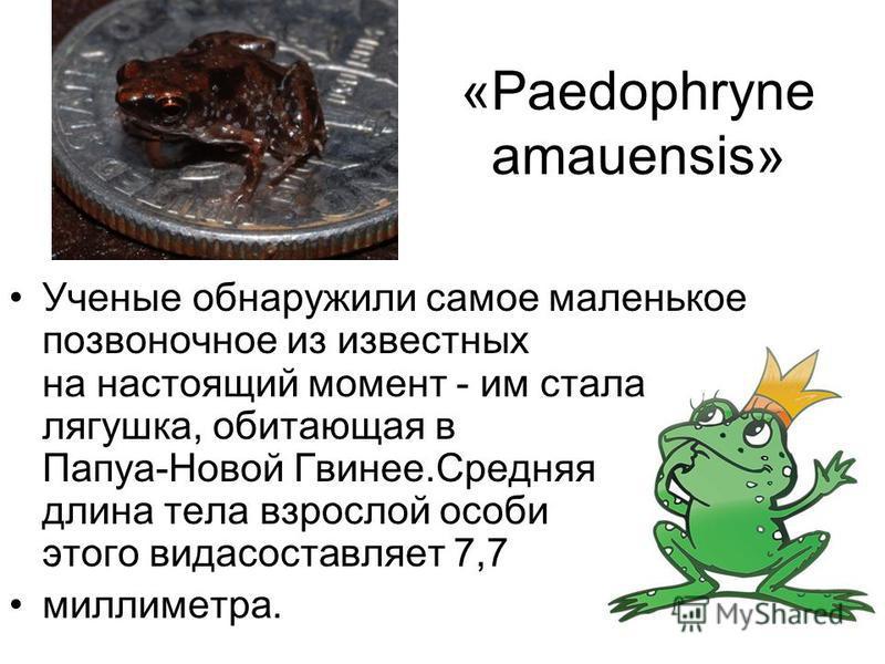 «Paedophryne amauensis» Ученые обнаружили самое маленькое позвоночное из известных на настоящий момент - им стала лягушка, обитающая в Папуа-Новой Гвинее.Средняя длина тела взрослой особи этого вида составляет 7,7 миллиметра.