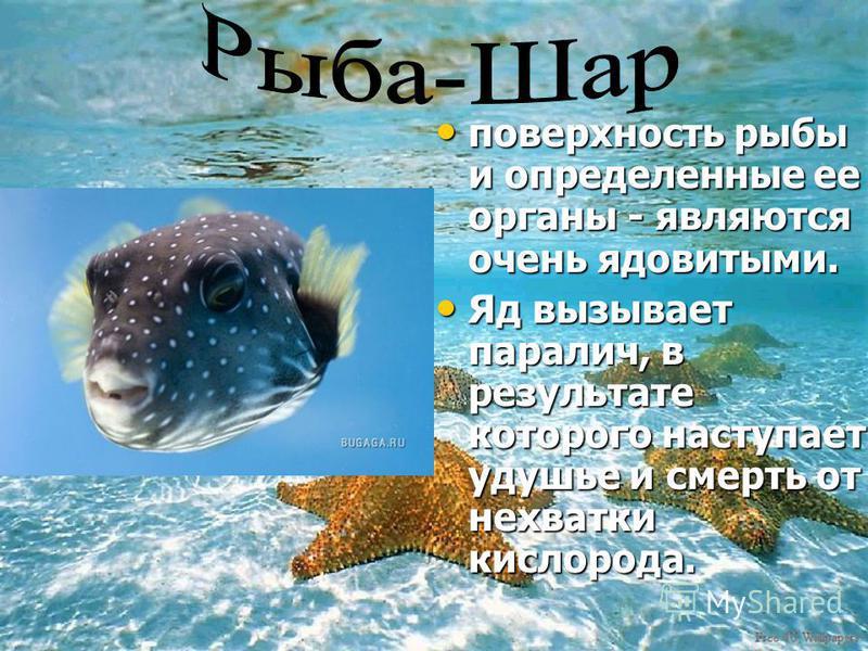 поверхность рыбы и определенные ее органы - являются очень ядовитыми. поверхность рыбы и определенные ее органы - являются очень ядовитыми. Яд вызывает паралич, в результате которого наступает удушье и смерть от нехватки кислорода. Яд вызывает парали