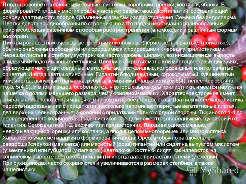 Плоды розоцветных сухие или сочные, листовки, коробочки, орешки, костянки, яблоки. В формировании плода у многих родов участвует разрастающийся гипантий, составляющий основу адаптивности плодов к различным агентам распространения. Семена без эндоспер