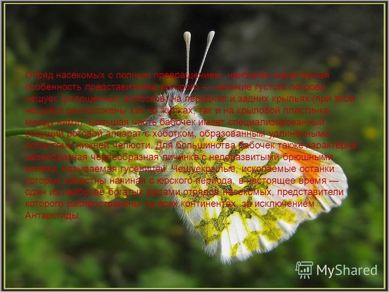 Отряд насекомых с полным превращением, наиболее характерная особенность представителей которого наличие густого покрова чешуек (уплощённых волосков) на передних и задних крыльях (при этом чешуйки расположены как на жилках, так и на крыловой пластинке