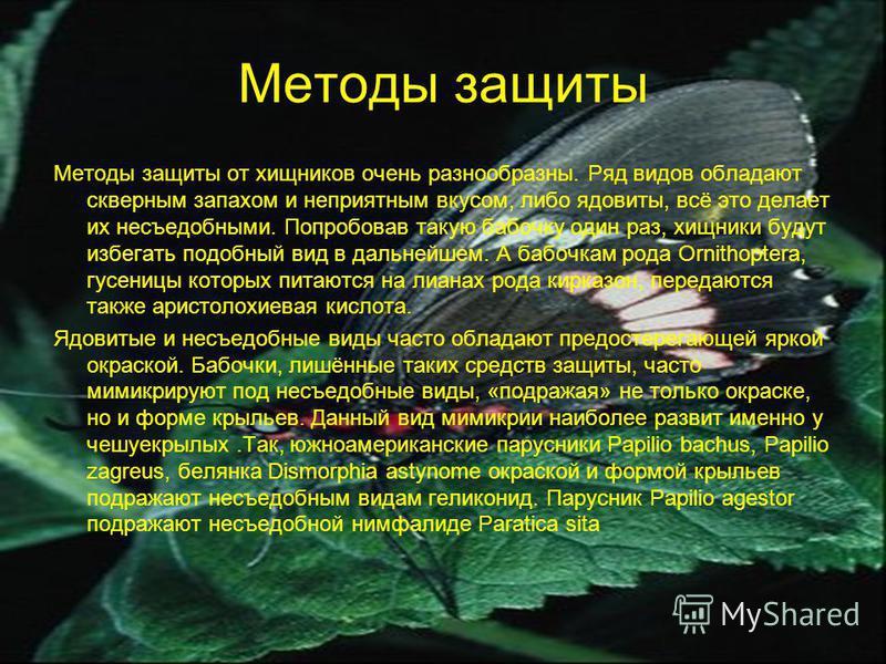 Методы защиты Методы защиты от хищников очень разнообразны. Ряд видов обладают скверным запахом и неприятным вкусом, либо ядовиты, всё это делает их несъедобными. Попробовав такую бабочку один раз, хищники будут избегать подобный вид в дальнейшем. А
