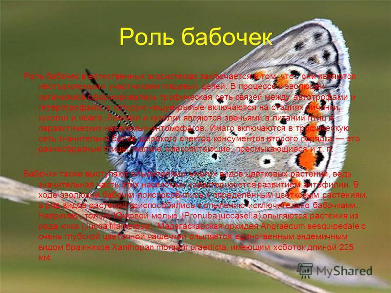 Роль бабочек Роль бабочек в естественных экосистемах заключается в том, что, они являются неотъемлемыми участниками пищевых цепей. В процессе к эволюции организмов сформировалась трофическая сеть связей между автотрофами и гетеротрофами, в которую че