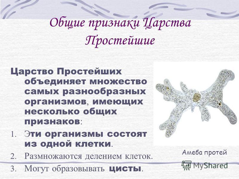 Царство Простейшие.