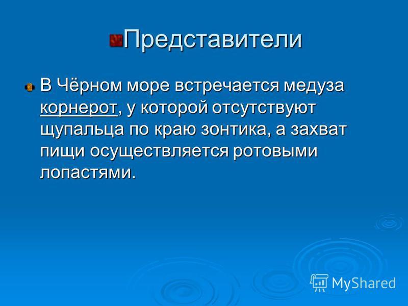 Представители В Чёрном море встречается медуза корнерот, у которой отсутствуют щупальца по краю зонтика, а захват пищи осуществляется ротовыми лопастями.
