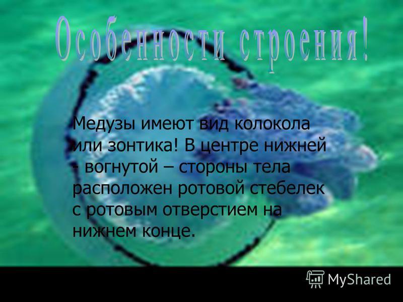 Медузы имеют вид колокола или зонтика! В центре нижней - вогнутой – стороны тела расположен ротовой стебелек с ротовым отверстием на нижнем конце.