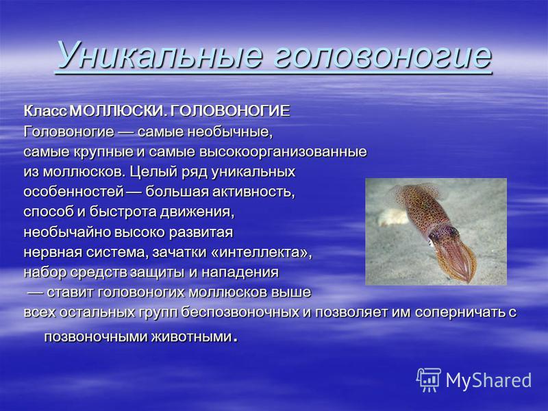 Уникальные головоногие Класс МОЛЛЮСКИ. ГОЛОВОНОГИЕ Головоногие самые необычные, самые крупные и самые высокоорганизованные из моллюсков. Целый ряд уникальных особенностей большая активность, способ и быстрота движения, необычайно высоко развитая нерв
