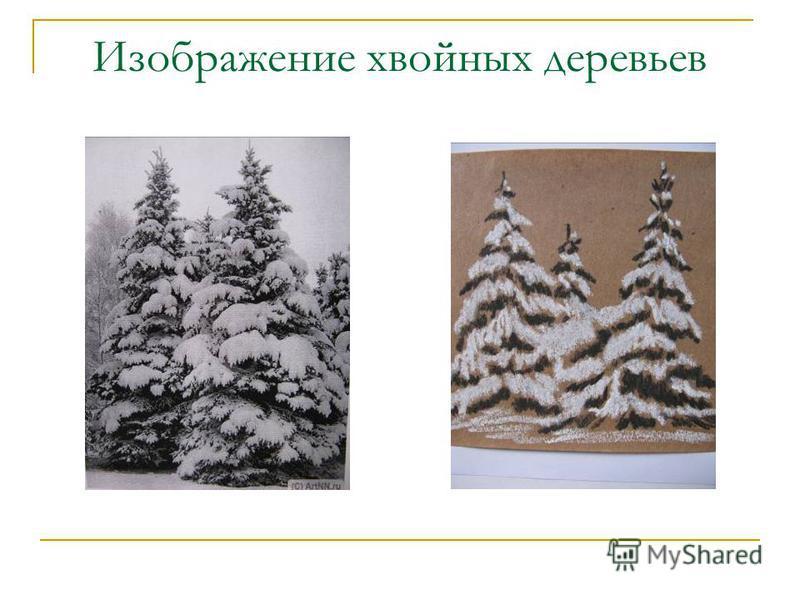 Изображение хвойных деревьев