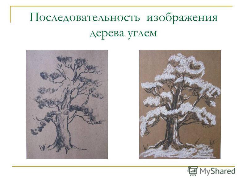 Последовательность изображения дерева углем