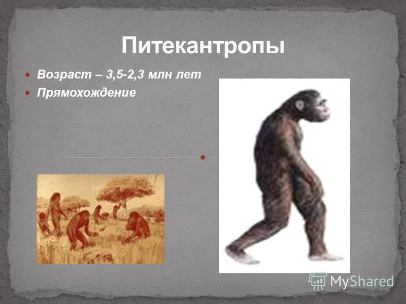 Возраст – 3,5-2,3 млн лет Прямохождение