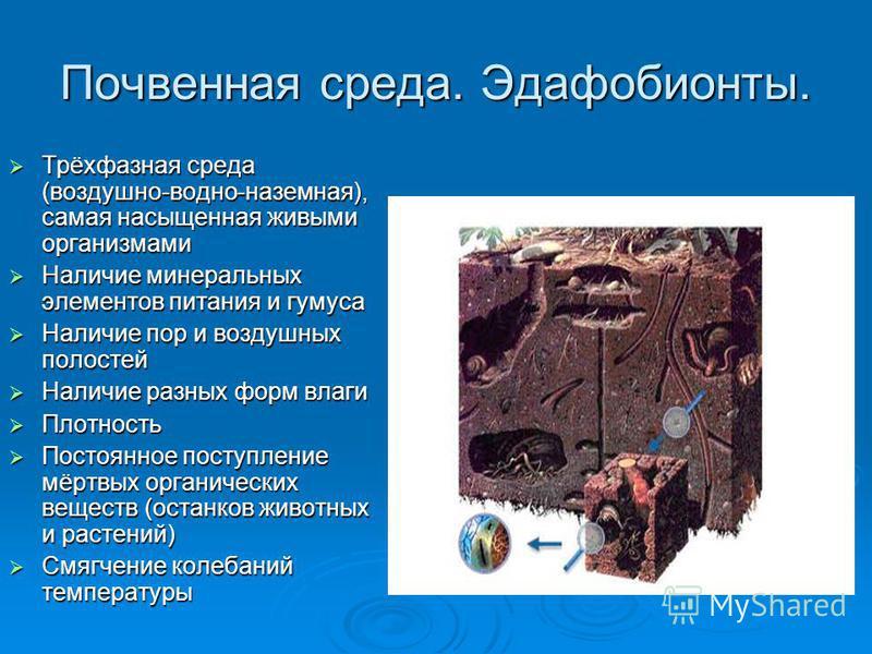 Почвенная среда. Эдафобионты. Трёхфазная среда (воздушно-водно-наземная), самая насыщенная живыми организмами Трёхфазная среда (воздушно-водно-наземная), самая насыщенная живыми организмами Наличие минеральных элементов питания и гумуса Наличие минер