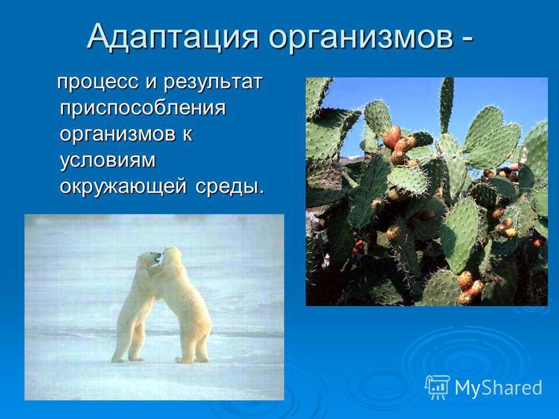 Адаптация организмов - процесс и результат приспособления организмов к условиям окружающей среды. процесс и результат приспособления организмов к условиям окружающей среды.