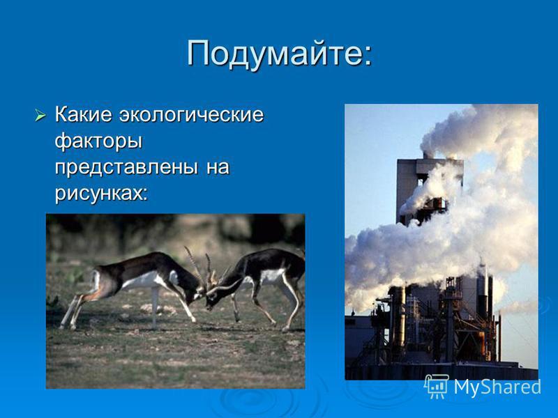 Подумайте: Какие экологические факторы представлены на рисунках: Какие экологические факторы представлены на рисунках: