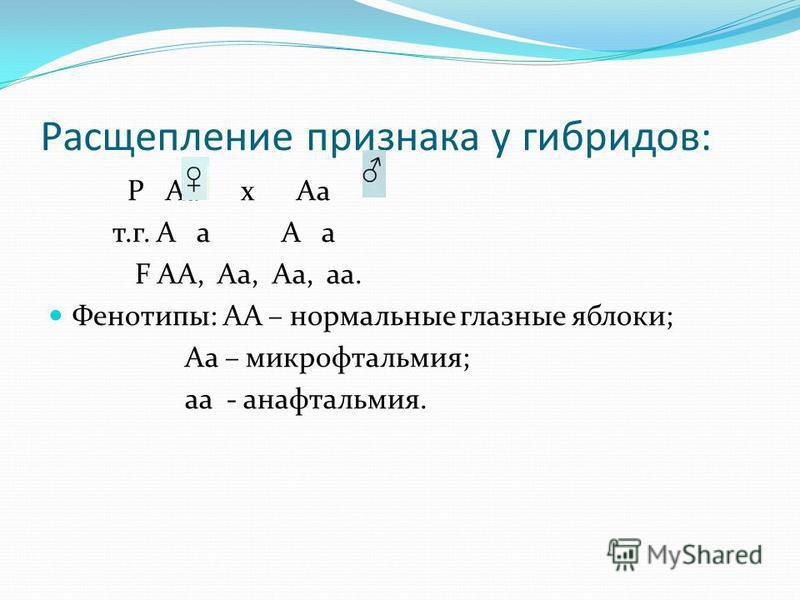Расщепление признака у гибридов: Р Аа х Аа т.г. А а А а F АА, Аа, Аа, а. Фенотипы: АА – нормальные глазные яблоки; Аа – микрофтальмия; а - анафтальмия.