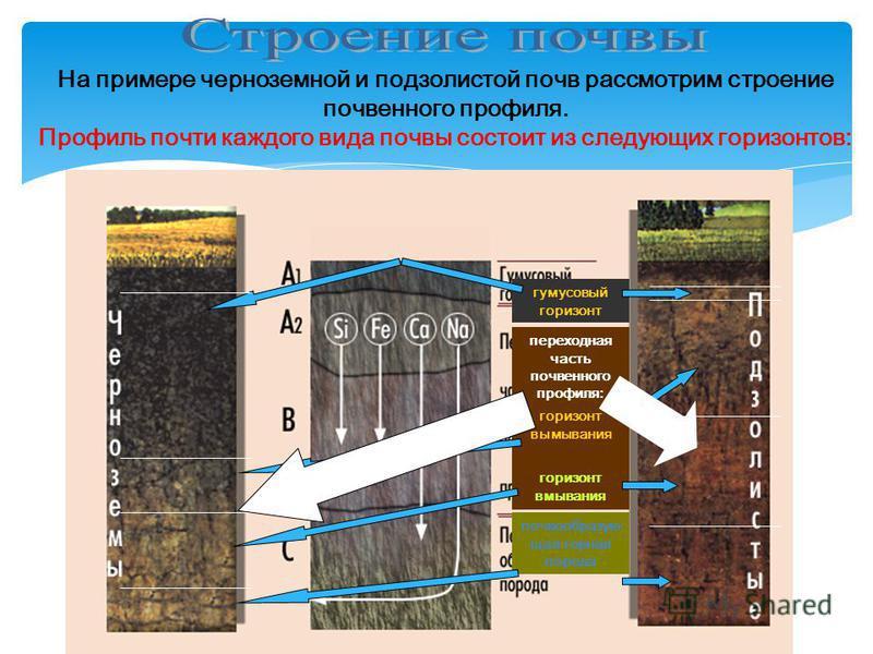 На примере черноземной и подзолистой почв рассмотрим строение почвенного профиля. Профиль почти каждого вида почвы состоит из следующих горизонтов: гумусовый горизонт переходная часть почвенного профиля: почва образующая горная порода горизонт вымыва