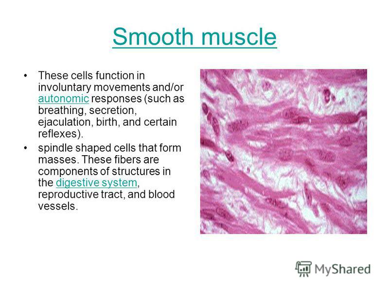 Smooth muscle These cells function in involuntary movements and/or autonomic responses (such as breathing, secretion, ejaculation, birth, and certain reflexes). autonomic spindle shaped cells that form masses. These fibers are components of structure