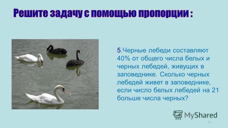 13 5. Черные лебеди составляют 40% от общего числа белых и черных лебедей, живущих в заповеднике. Сколько черных лебедей живет в заповеднике, если число белых лебедей на 21 больше числа черных?