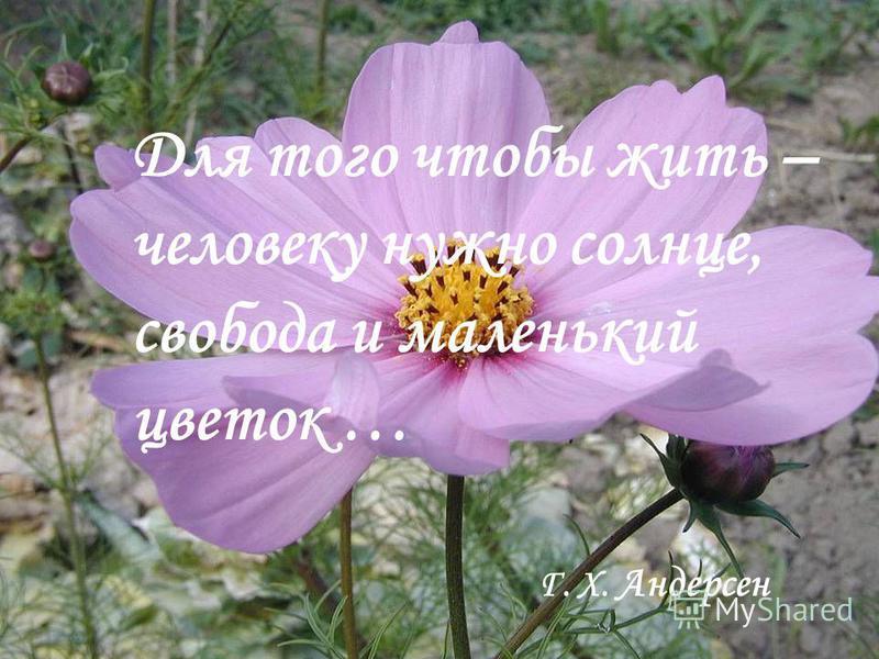 Для того чтобы жить – человеку нужно солнце, свобода и маленький цветок … Г. Х. Андерсен