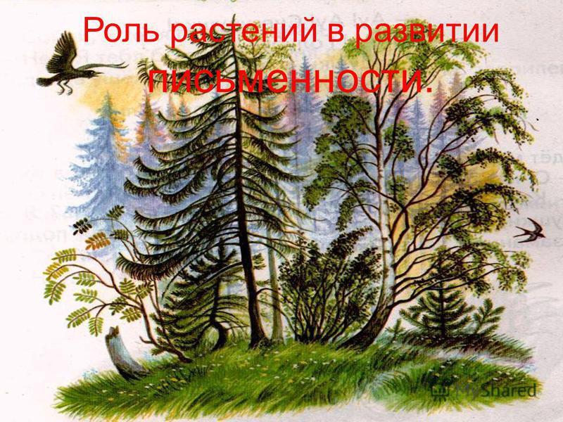 Роль растений в развитии письменности.