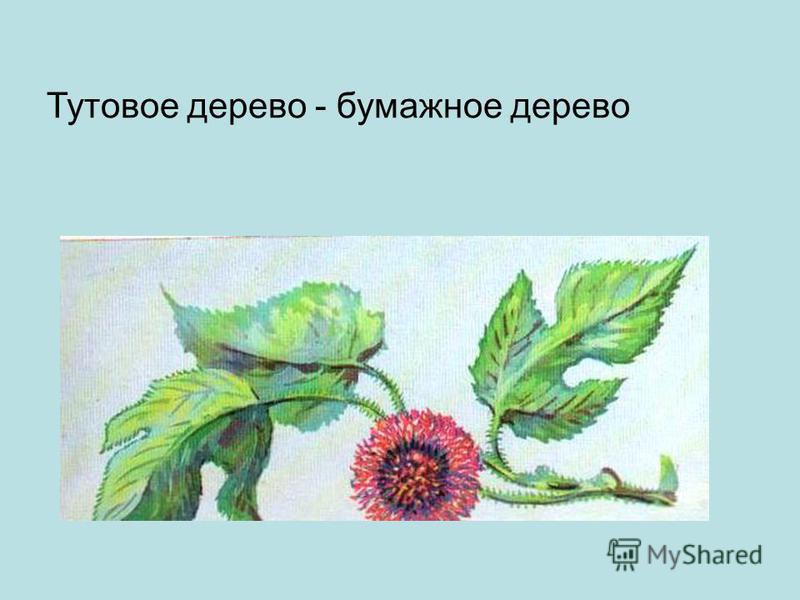 Тутовое дерево - бумажное дерево