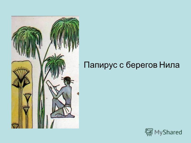 Папирус с берегов Нила