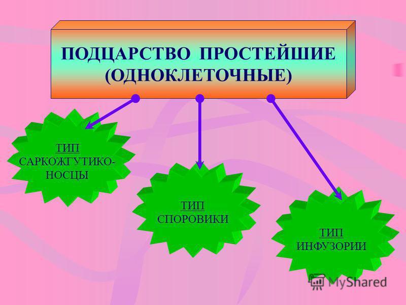 ПОДЦАРСТВО ПРОСТЕЙШИЕ (ОДНОКЛЕТОЧНЫЕ) ТИП СПОРОВИКИ ТИП САРКОЖГУТИКО- НОСЦЫ ТИП ИНФУЗОРИИ