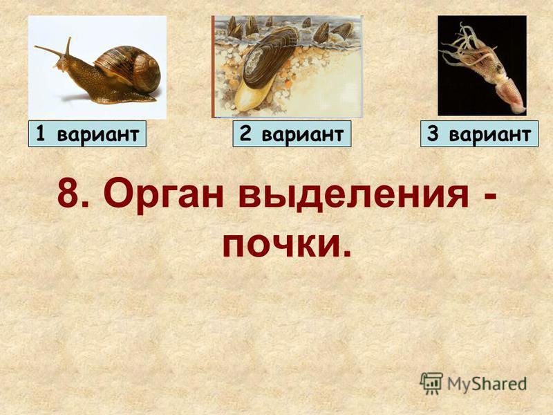 8. Орган выделения - почки. 1 вариант 2 вариант 3 вариант