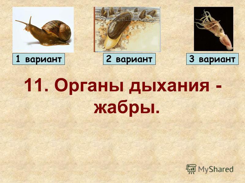 11. Органы дыхания - жабры. 1 вариант 2 вариант 3 вариант