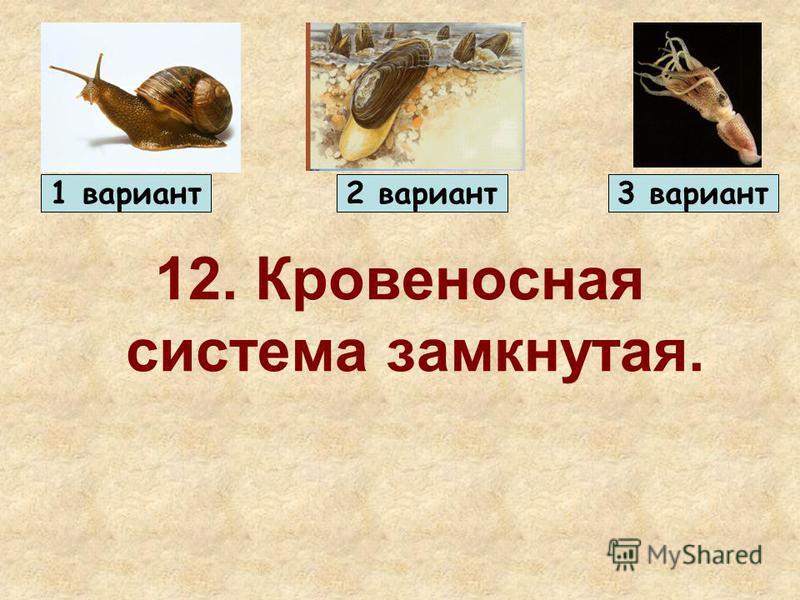 12. Кровеносная система замкнутая. 1 вариант 2 вариант 3 вариант