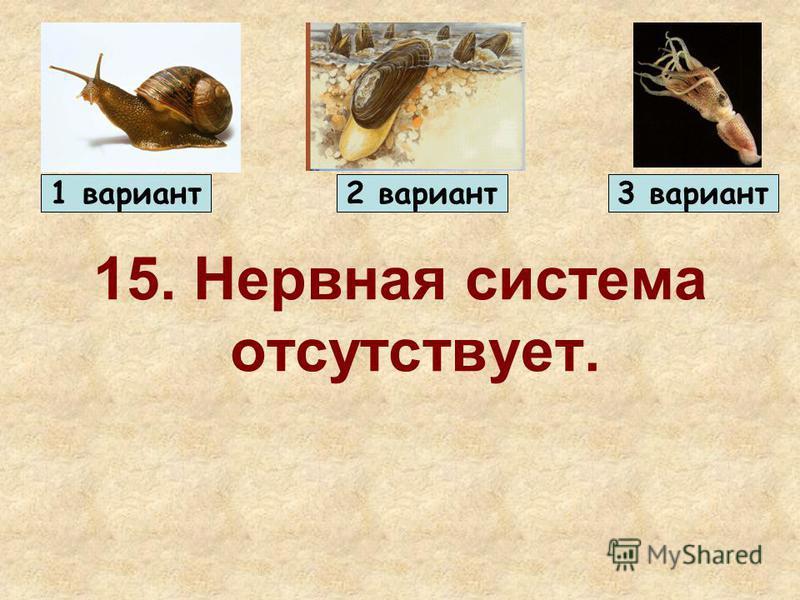 15. Нервная система отсутствует. 1 вариант 2 вариант 3 вариант