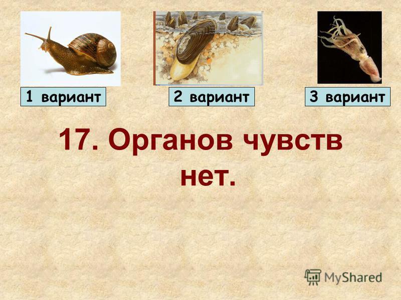 17. Органов чувств нет. 1 вариант 2 вариант 3 вариант
