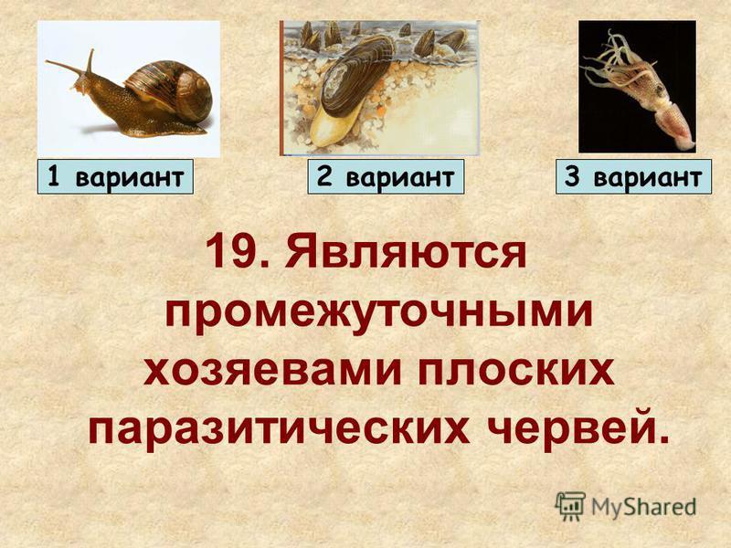 19. Являются промежуточными хозяевами плоских паразитических червей. 1 вариант 2 вариант 3 вариант