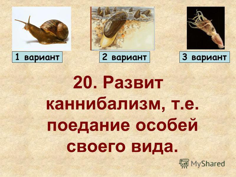 20. Развит каннибализм, т.е. поедание особей своего вида. 1 вариант 2 вариант 3 вариант