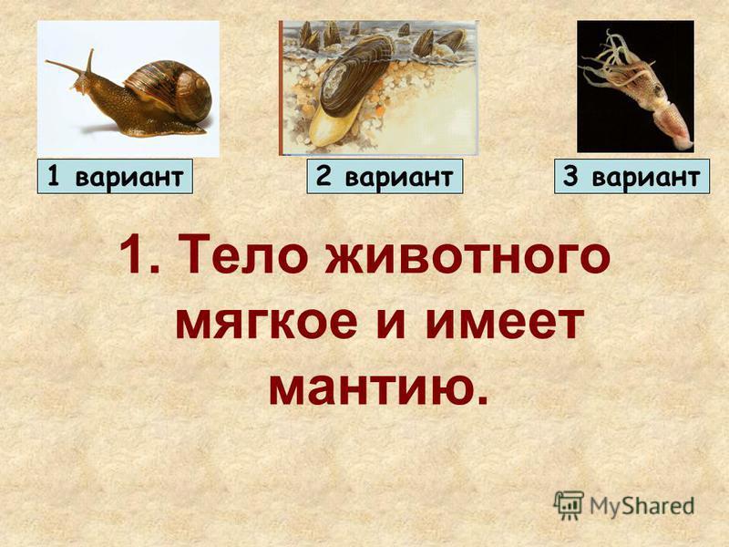 1. Тело животного мягкое и имеет мантию. 1 вариант 2 вариант 3 вариант