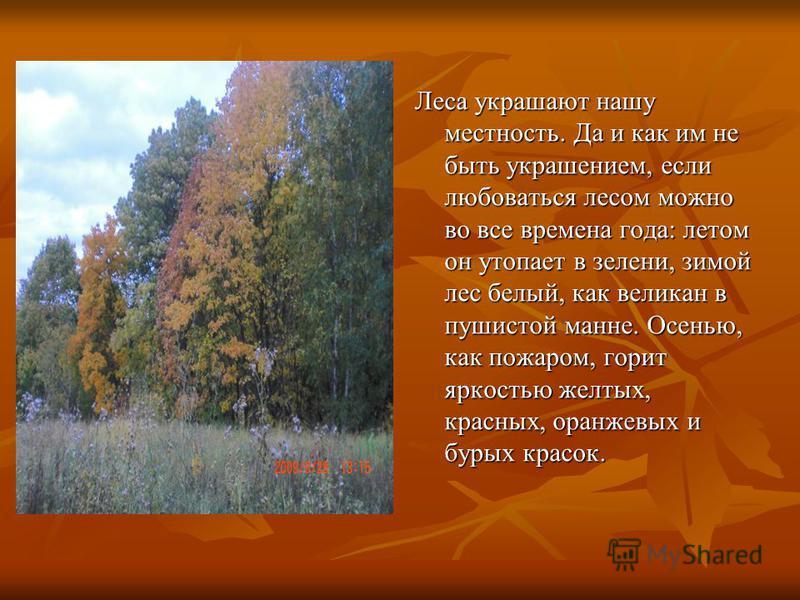Леса украшают нашу местность. Да и как им не быть украшением, если любоваться лесом можно во все времена года: летом он утопает в зелени, зимой лес белый, как великан в пушистой манне. Осенью, как пожаром, горит яркостью желтых, красных, оранжевых и