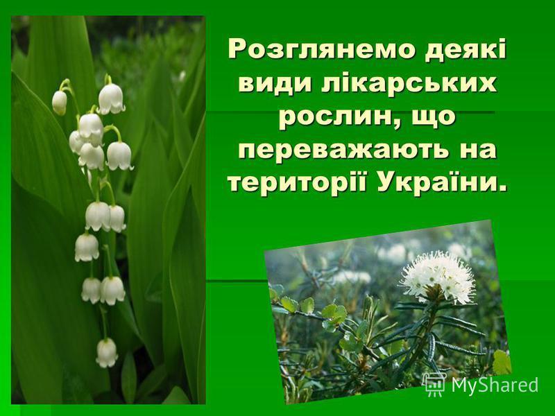 Розглянемо деякі види лікарських рослин, що переважають на території України.