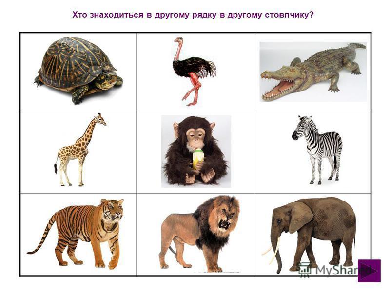 Мета: Розвивати вміння орієнтуватися на площині по рядочкам та стовпчикам. Закріпити назви екзотичних тварин. Формувати зв'язне мовлення. Розвиваюча гра